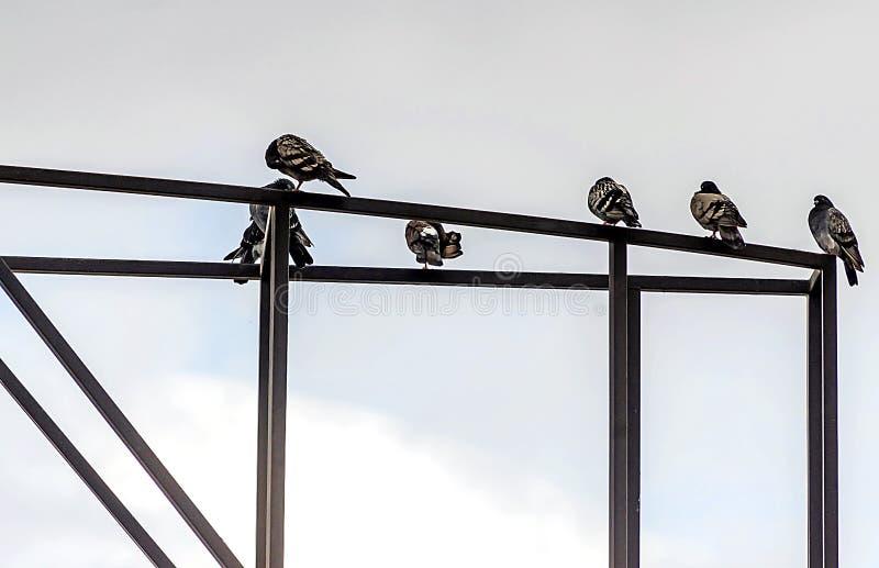 Gołębie siedzą na metal budowie obraz royalty free