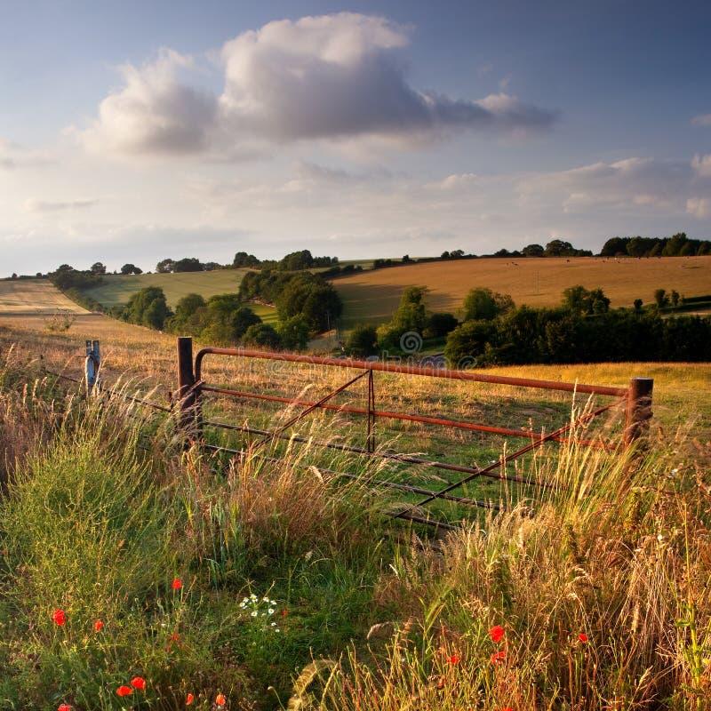 gończy cranborne Dorset wieczór uk obrazy royalty free