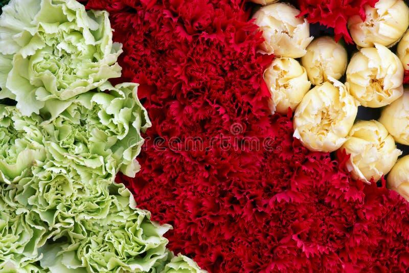 goździków kwiaty obraz royalty free