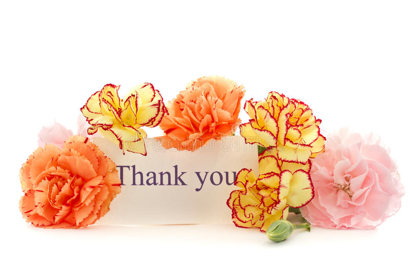 Goździków kwiaty obraz stock