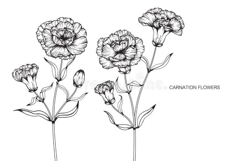 Goździk kwitnie rysunek i nakreślenie z sztuką na bielu plecy ilustracja wektor