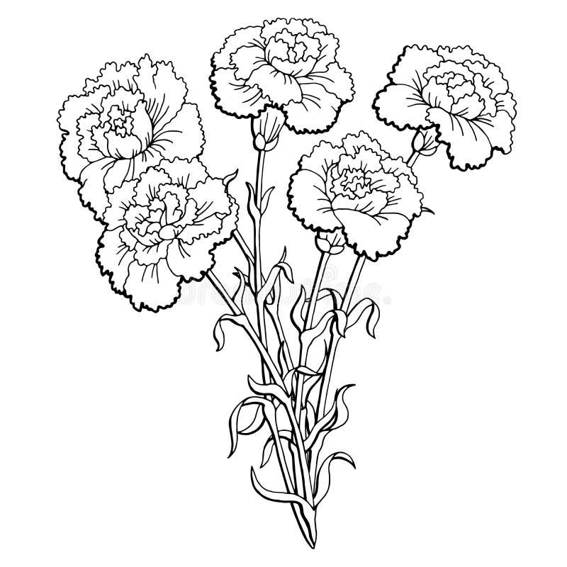 Goździka kwiatu bukieta nakreślenia ilustraci graficzny czarny biały odosobniony wektor royalty ilustracja