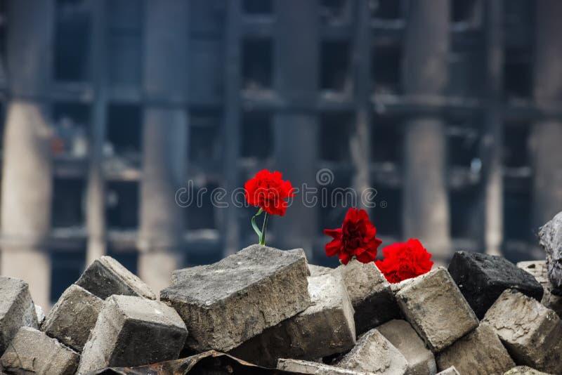 Goździki na barykadzie w Kijów obraz stock
