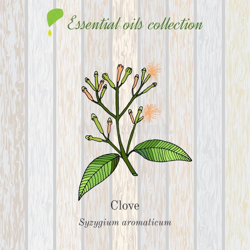 Goździkowego, istotnego oleju etykietka, aromatyczna roślina royalty ilustracja