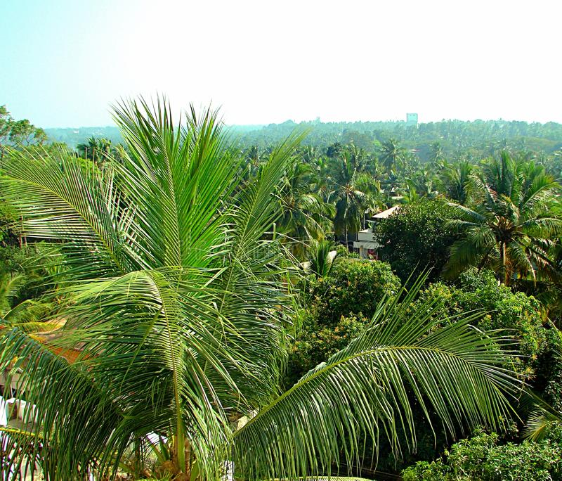 Go Green - Green Earth. This is a photograph of greenery seen in Kerala, India... Coconut trees and other trees are seen all around royalty free stock image