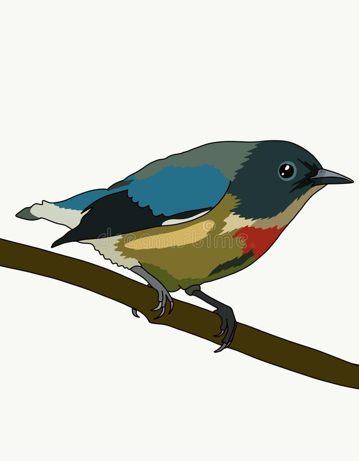 Dicaeum ignipectus. Go nectar eaters-brightly colored little birds, inhabitants of tropical forests of South Asia and Australia. Their characteristic features vector illustration