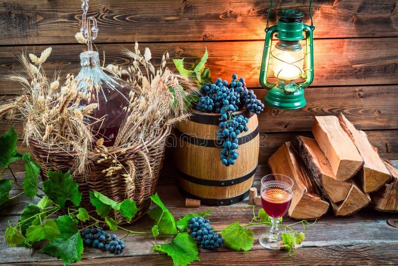 Goûtant le vin rouge directement de dame - jeanne photo stock