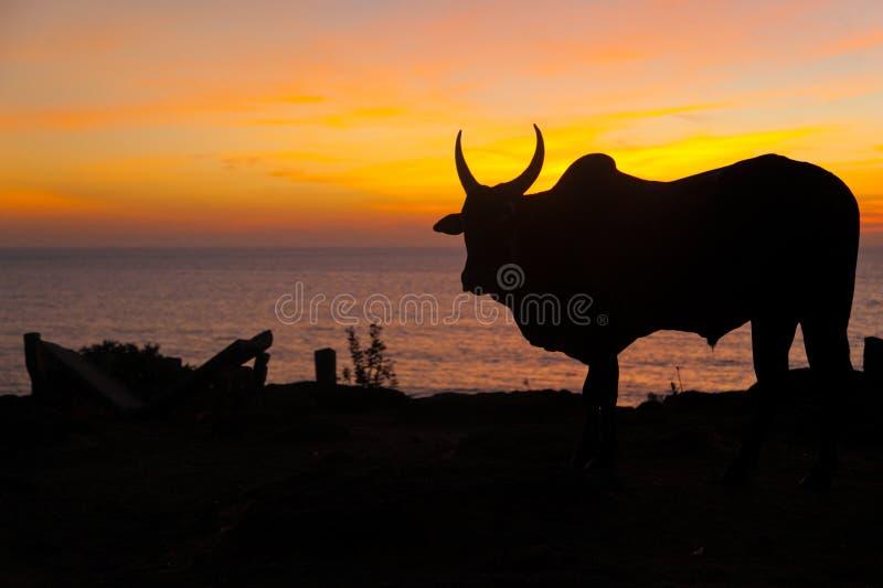 Goa de coucher du soleil image libre de droits
