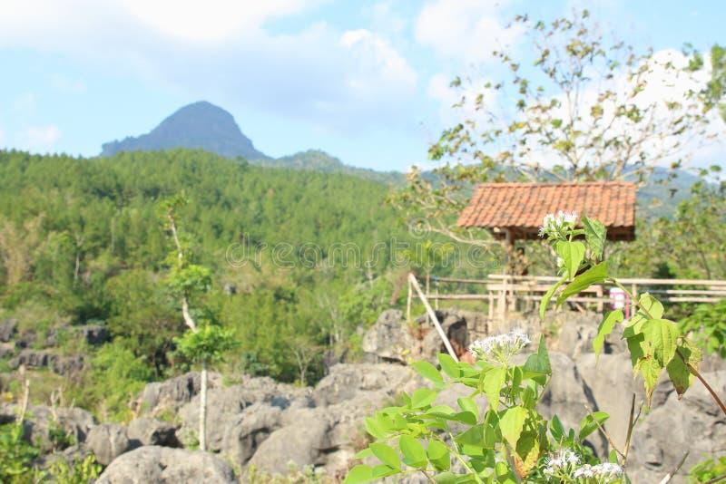 Goa Ngerit, Trenggalek East Java, Indonesia imagen de archivo