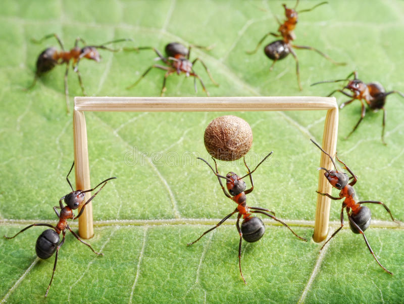 Goal, ants play soccer. Goal keeper in gate, team of ants play soccer stock photography