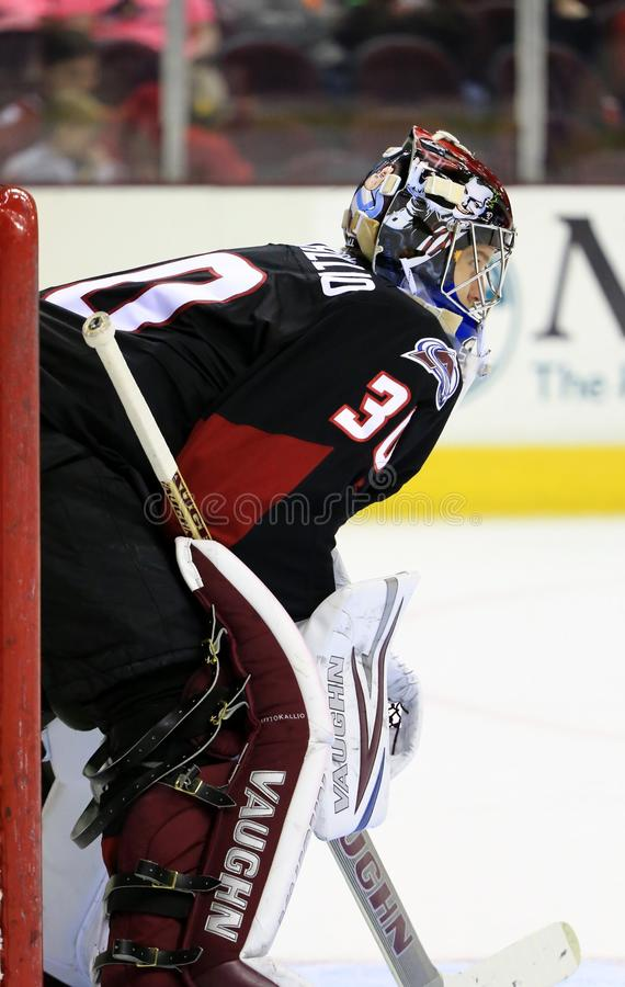 Goalie in position. Team goalie crouches in the goal ready for action at the pro hockey game stock image