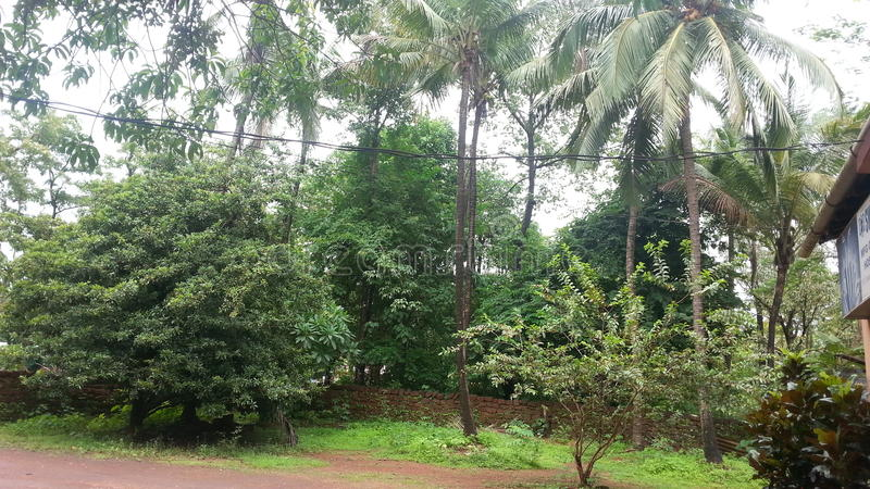 Goan wioska fotografia stock