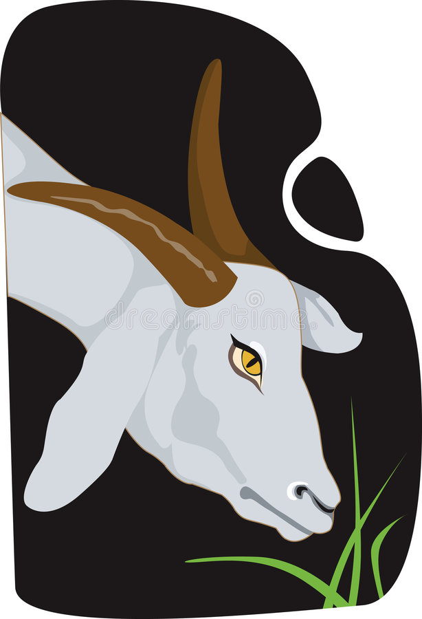 Download A goat stock vector. Image of goat, tail, mammal, cattle - 3557180