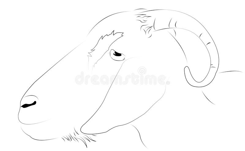 Goat as line drawing stock photos
