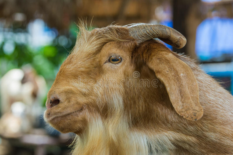 Goat Stock Images - Download 102,029 Royalty Free Photos