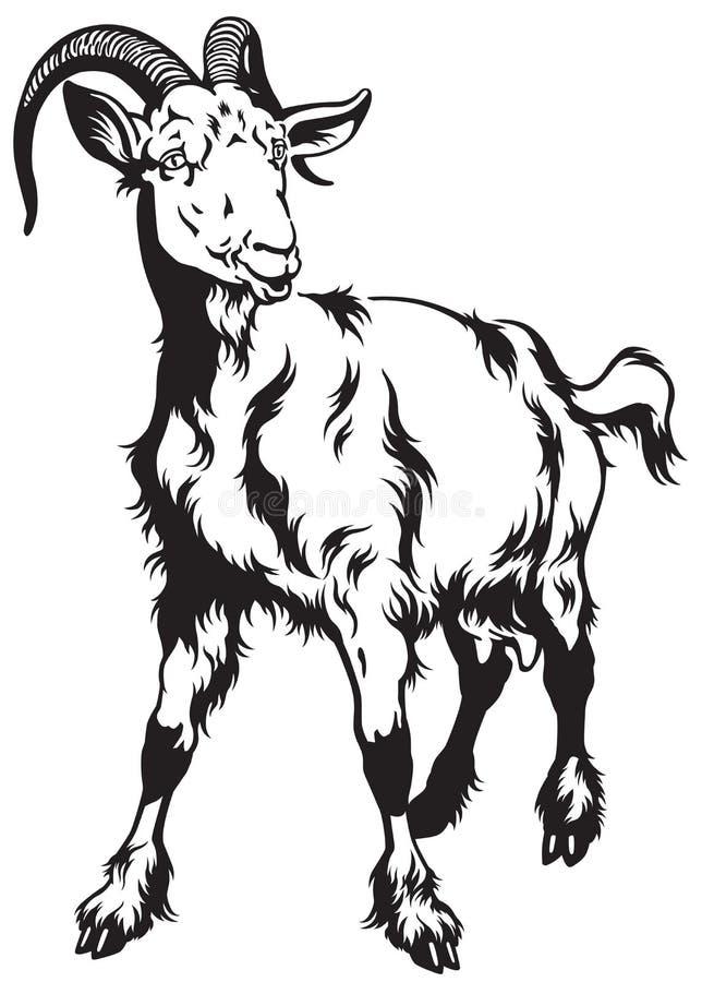 Goat black white. Goat front view black and white image royalty free illustration