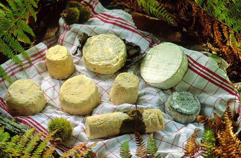 Download Goat cheese stock image. Image of france, farmer, deux - 8625381