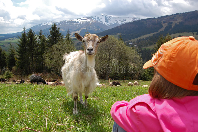 A goat and a child royalty free stock photography