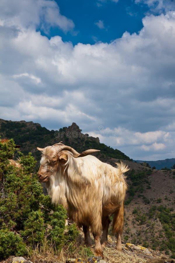 Download Goat Stock Photos - Image: 34165923