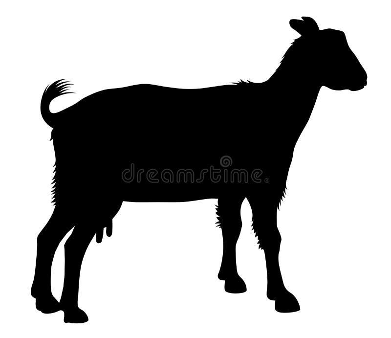 Goat. Detailed vector illustration of goat silhouette stock illustration