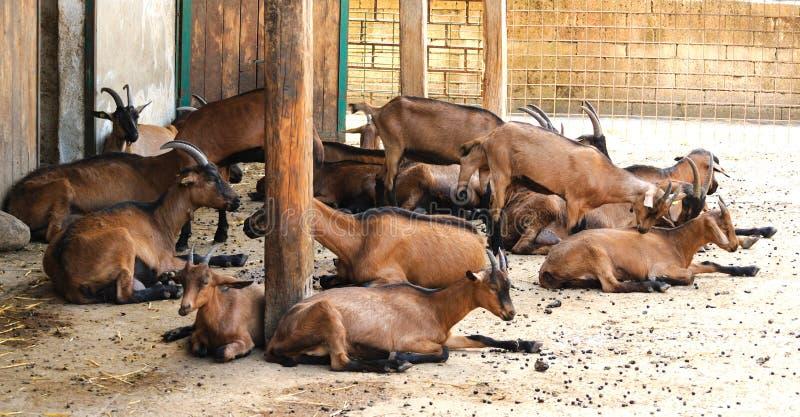 Goat Farm Royalty Free Stock Photography