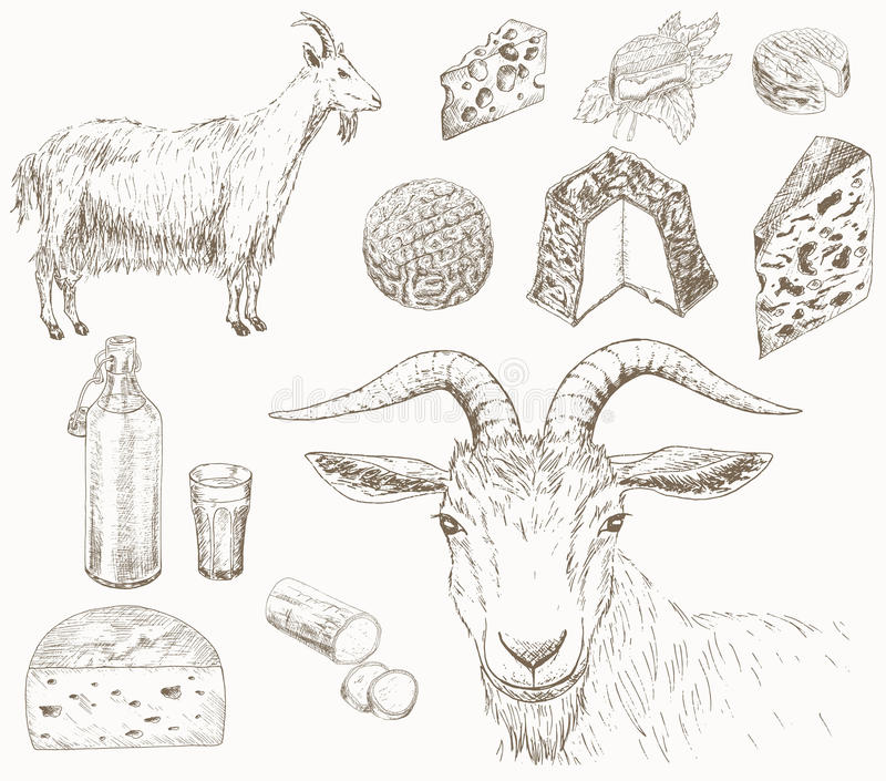 Goat farm. Goat, milk and cheese which produced from goats milk. Dairy farm set. Hand drawn country illustrations royalty free illustration