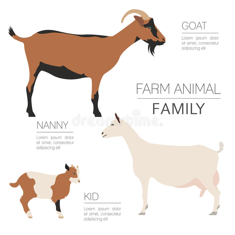 Goat farming infographic template. Animall family. Flat design. Vector illustration stock illustration