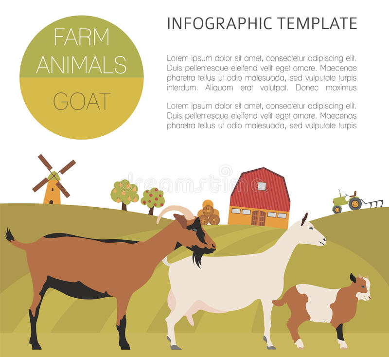 Goat farming infographic template. Animall family. Flat design. Vector illustration royalty free illustration