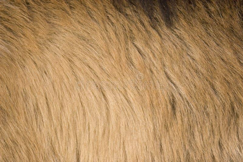 Goat Fur Stock Image