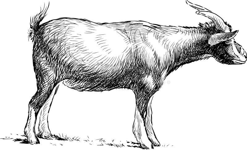 Download Goat Grazing Stock Vector - Image: 42911524