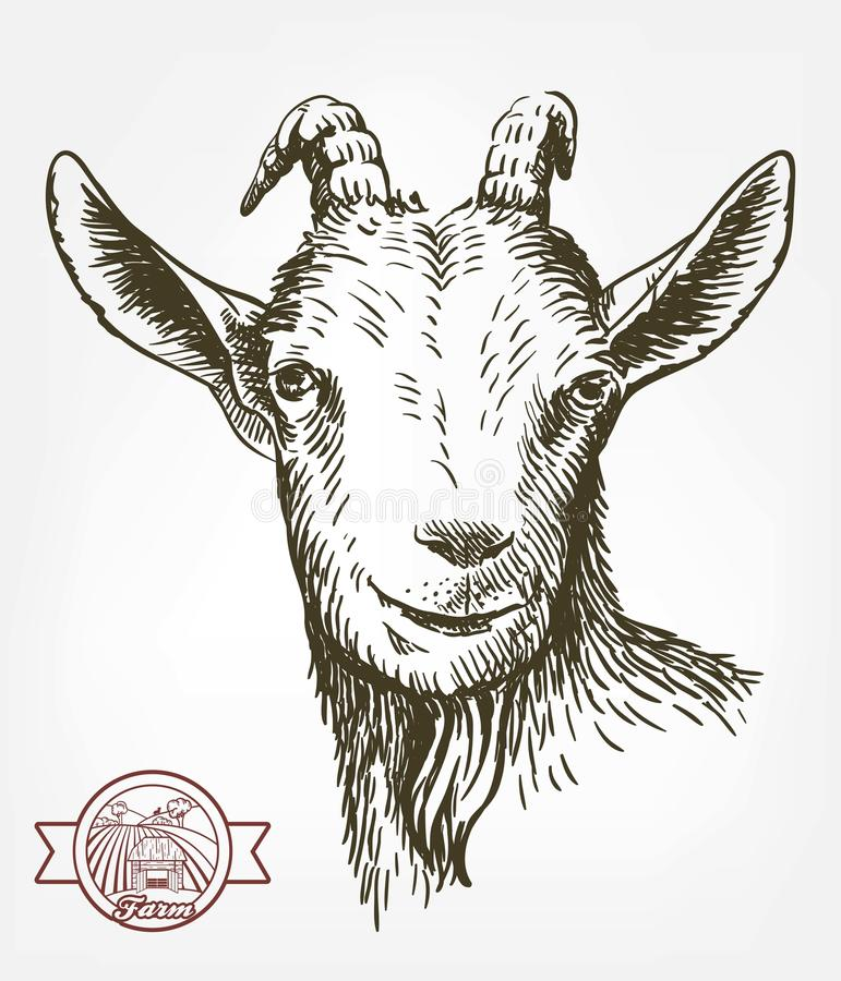 Free Goat Head. Livestock. Animal Grazing. Sketch Drawn By Hand. Royalty Free Stock Image - 86869596
