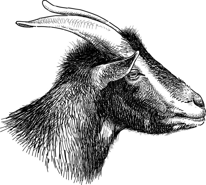 Download Goat Head Stock Vector Illustration Of Profile