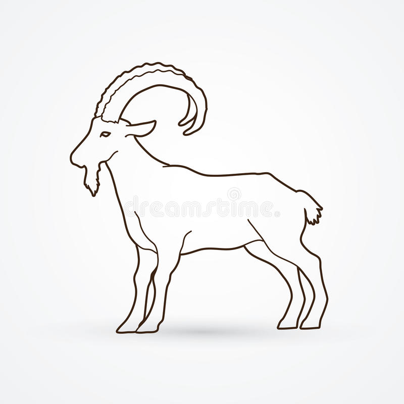 Goat Ibex. Goat standing outline graphic vector royalty free illustration