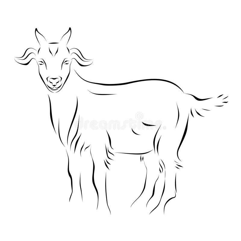 Line Drawing Goat : Goat ink line art stock vector illustration of artwork