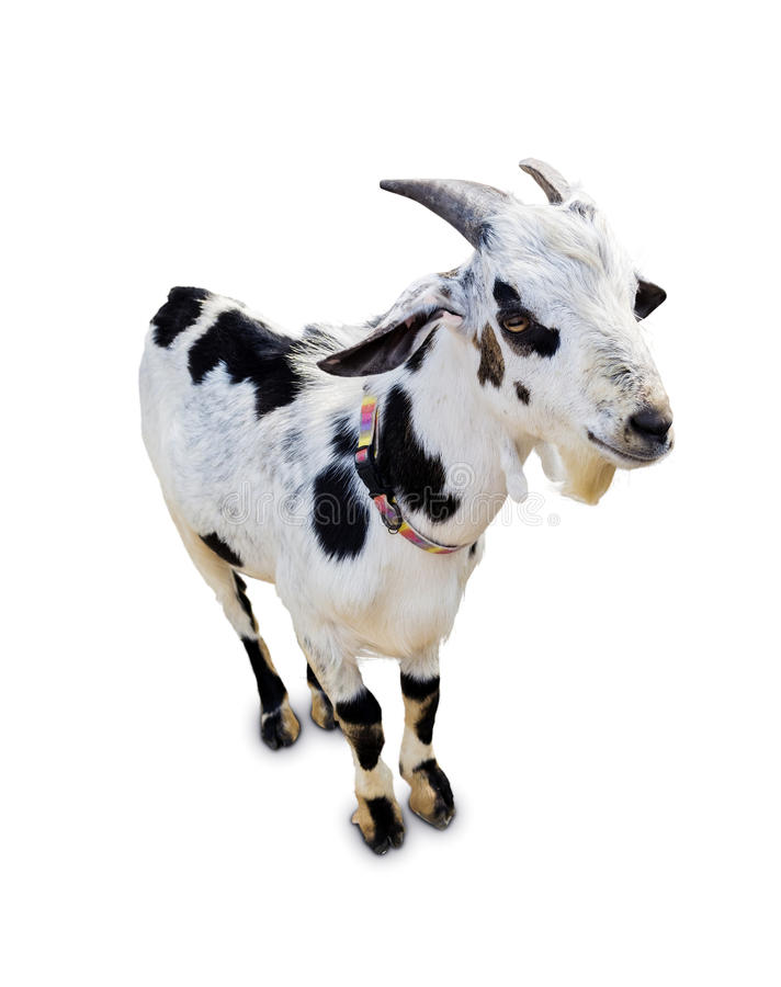 Free Goat Isolated Royalty Free Stock Photos - 29571888