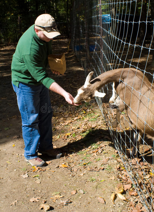 Download Goat Petting Zoo stock image. Image of farm, funny, activity - 15387833
