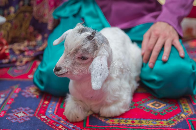 Goat`s baby sit down on the floor. Head from white goat kid .White goat standing royalty free stock photo