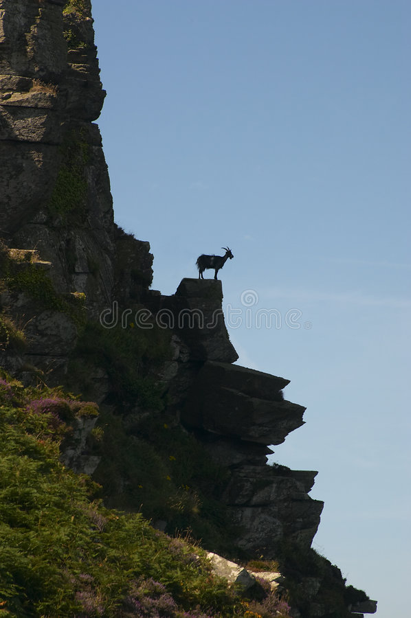 Goat on top of rock stock photos