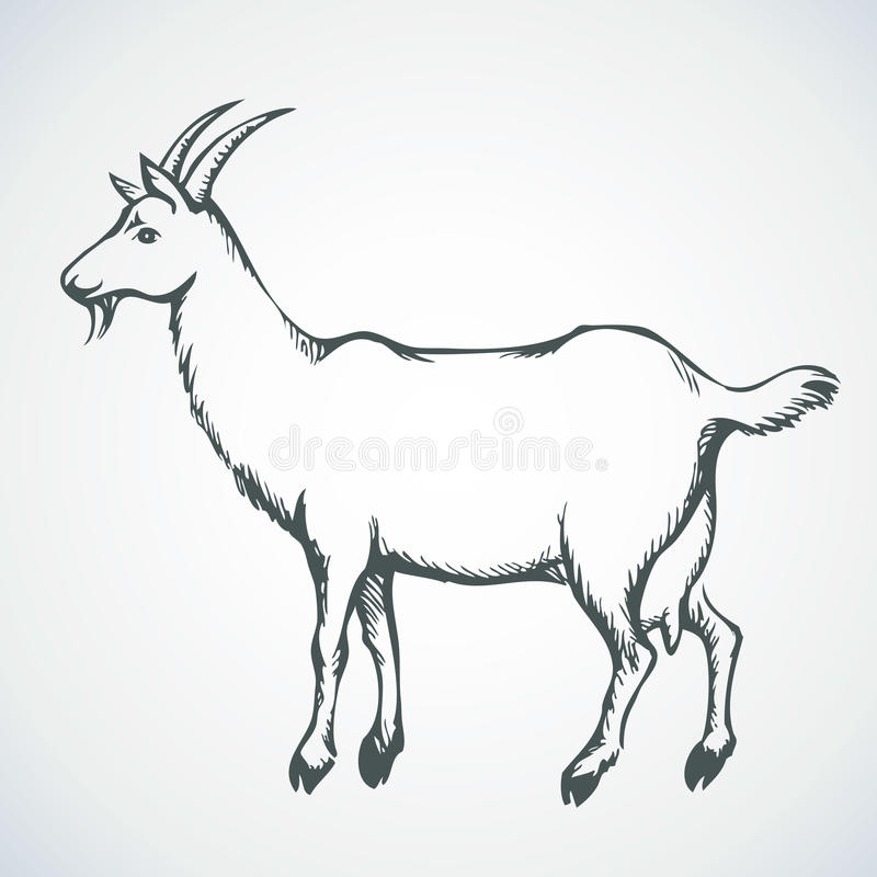 Goat. Vector drawing royalty free illustration