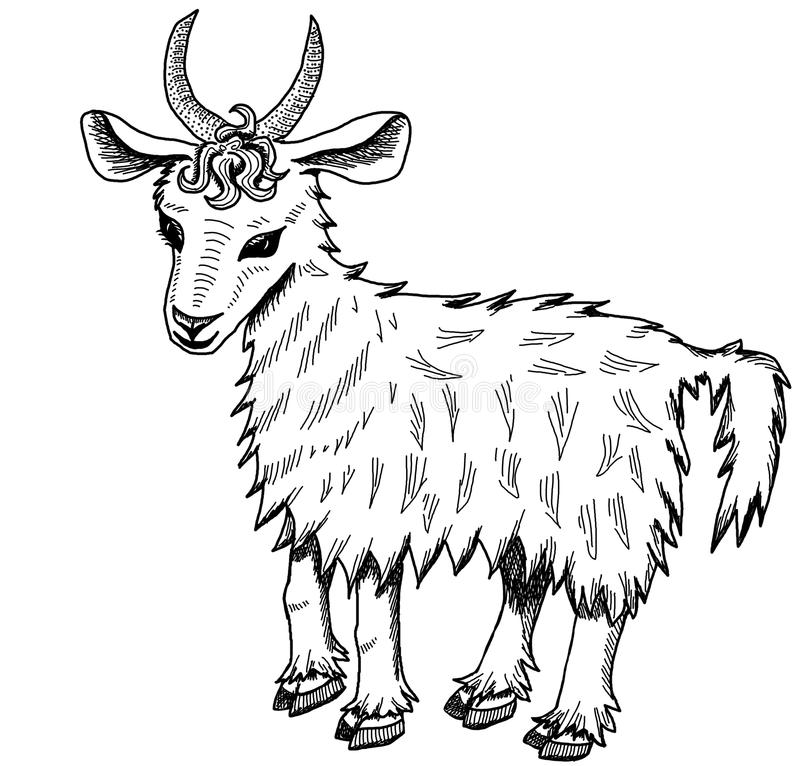 Goat on a white background royalty free stock image