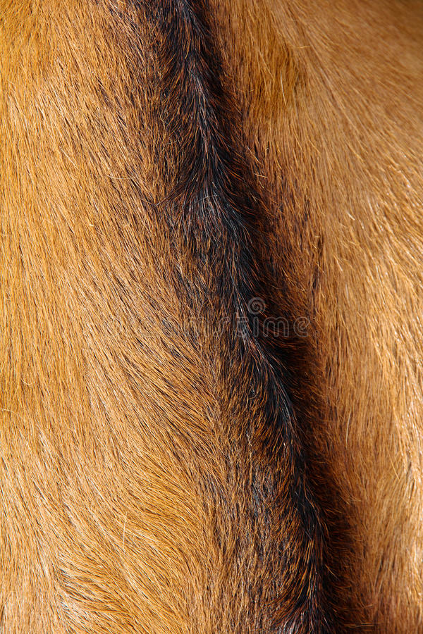 Free Goat Wool Background Royalty Free Stock Photography - 31440367