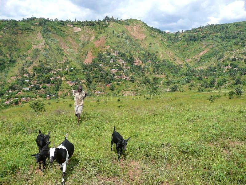 Goatherd в холмах Бурундии стоковое изображение