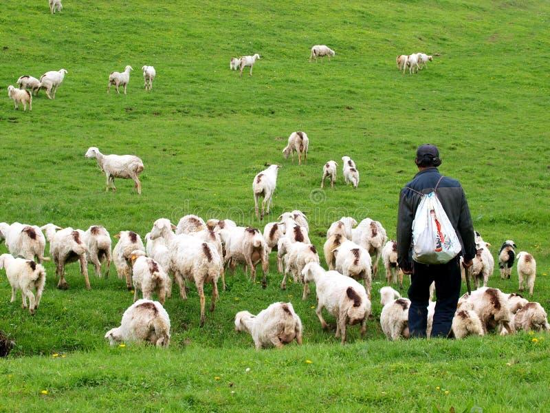 Download Goatherd stock image. Image of grassland, highlands, mammal - 25195053