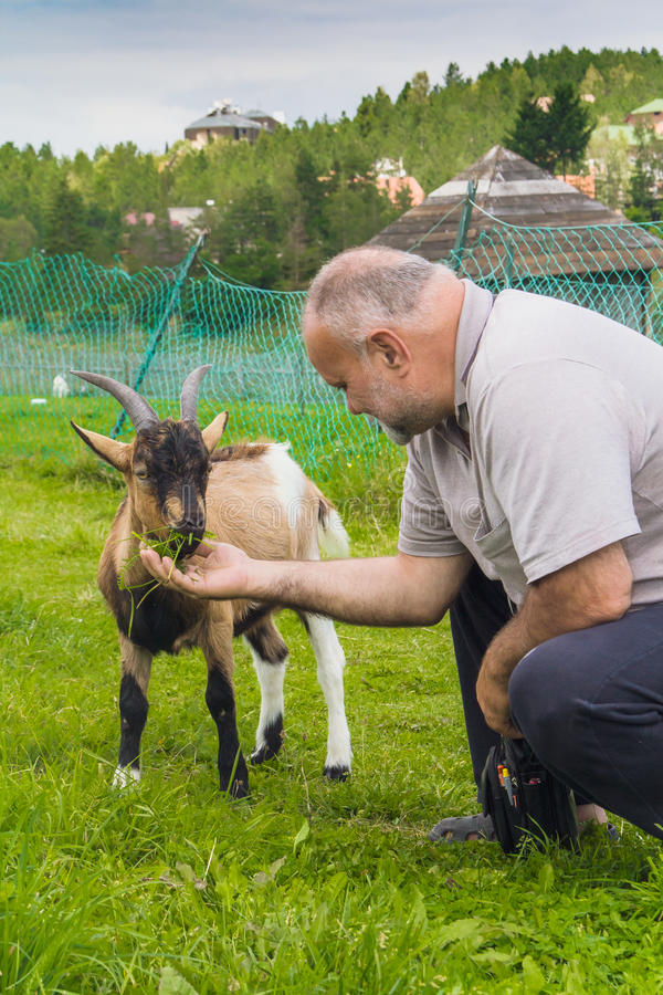 Download Goatlings Affamé Prenant Le Déjeuner Photo stock - Image du zone, personne: 76088626