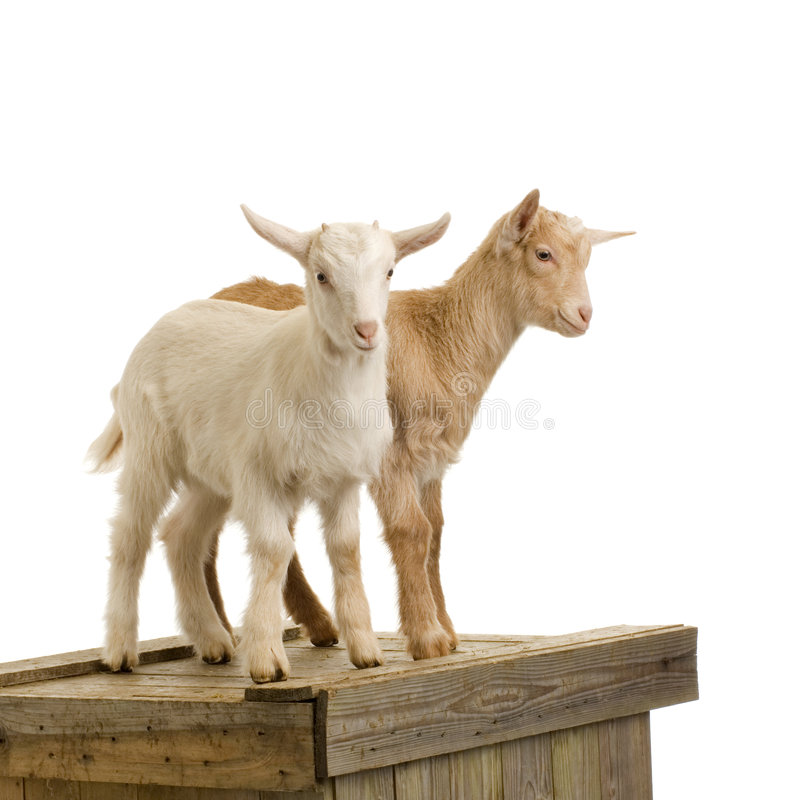 Download Goats Stock Photos - Image: 2306413