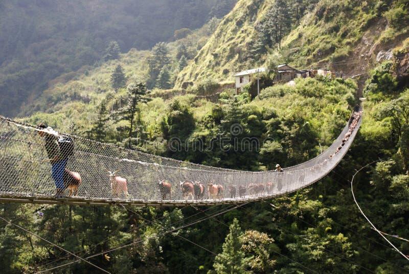 Goats on bridge royalty free stock photos