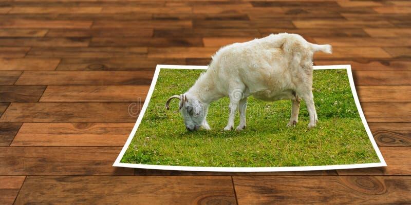 Goats, Goat, Grass, Cow Goat Family Free Public Domain Cc0 Image