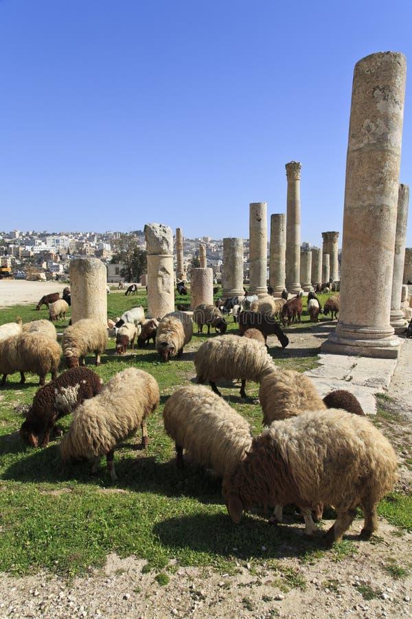 Goats & sheep stock image