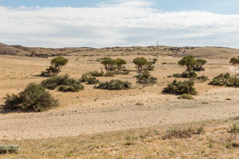 Gobi desert mongolia. Gobi desert, green trees in the desert, beautiful landscape, Mongolia stock photography