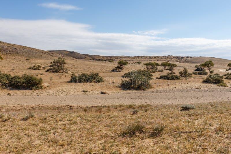 Gobi desert, Mongolia. Gobi desert, green shrubs along the dried river bed, landscape, Mongolia royalty free stock photography